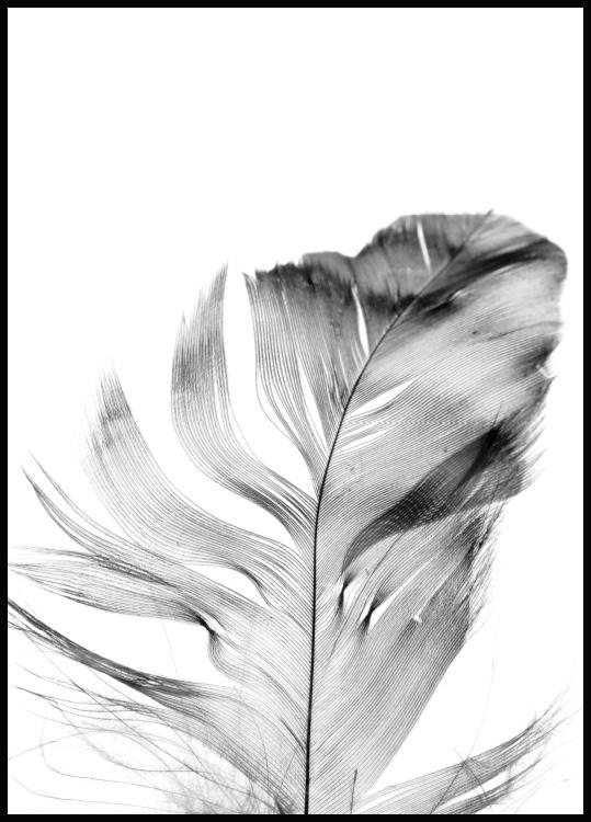 Feather Póster