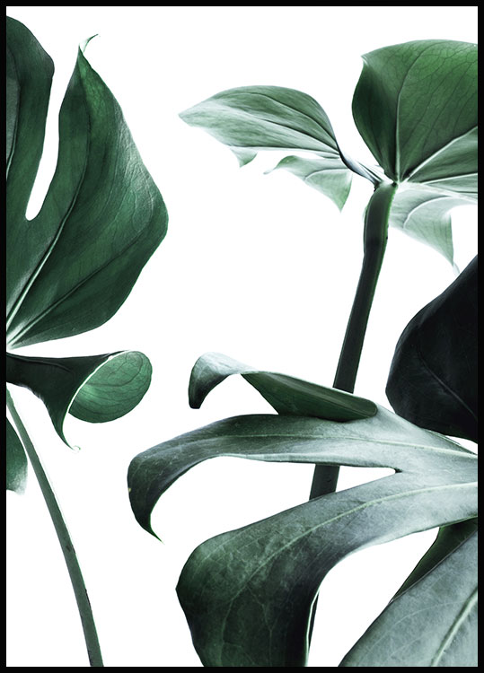 Monstera no. 1 Póster